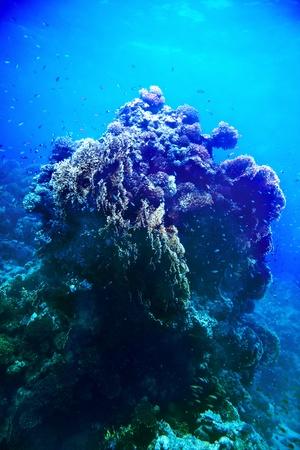 actinia: Grupo de agua azul coral pescado.