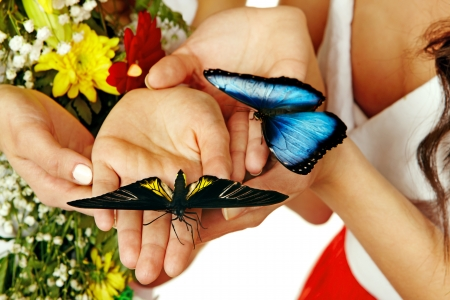 morpho: Butterfly on hand. Isolated. Stock Photo