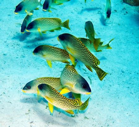 actinia: Grupo de coral de aguas pescado azul.