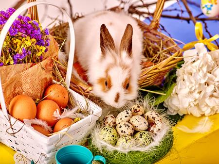 pascuas navide�as: Todav�a de Pascua vida con los huevos y el conejo en la cesta. Vista superior.