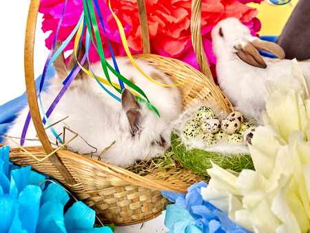 pascuas navide�as: Easter still life with eggs and group rabbit in basket.