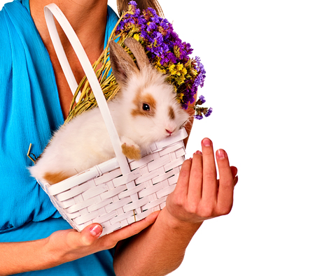 animal woman: Easter egg bunny on woman hands. girl holding animal in in basket . Cropped shot of female in blue with flowers. Adults at festival. White background isolated. Stock Photo
