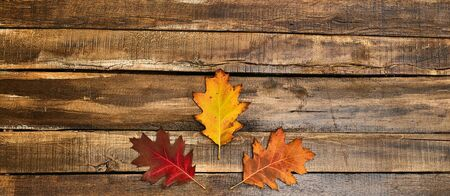 Autumn maple leaves on top view wooden table.