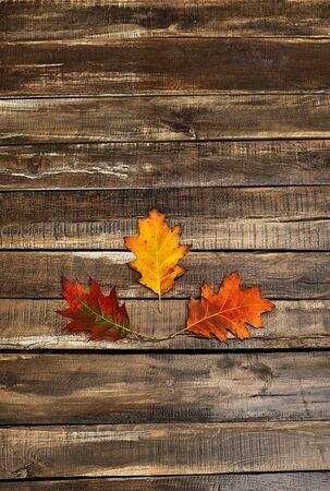 Autumn maple leaves on top view wooden table vertical frame.