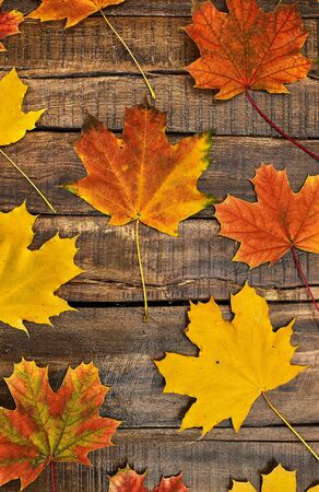 Autumn maple leaves background on top view wooden table vertical frame. Standard-Bild