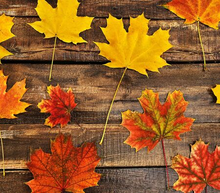 Autumn maple leaves background on top view wooden table square frame.