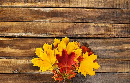 Autumn maple leaves bouquet on wooden table horizontal frame with copy space.