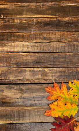 Autumn maple leaves on top view wooden table. Vertical frame with bottom right corner. Standard-Bild