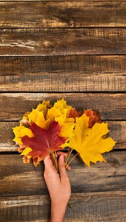 Autumn maple leaves bouquet in female hand top view on wooden table vertical frame.