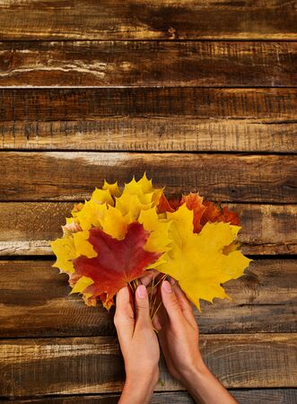 Autumn maple leaves bouquet in female hands top view on wooden table vertical frame with copy space up.