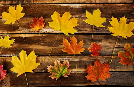 Background autumn maple leaves are far apart. Top view on wooden table long horizontal frame.