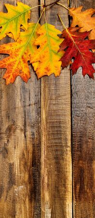 Top view autumn maple leaves on wooden table vertical frame with copy space bottom.