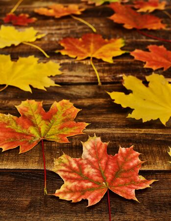 Autumn maple leaves background on on horizontal arranged boards. Top view wooden table vertical frame. Standard-Bild