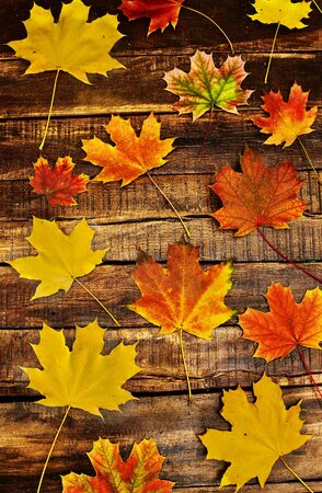Autumn background with maple leaves lie on horizontally arranged old wooden boards. Top view wooden table vertical frame.