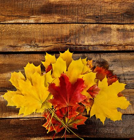 Autumn maple leaves bouquet on top view wooden boards. Vertical frame with bottom side foliage and copy space.