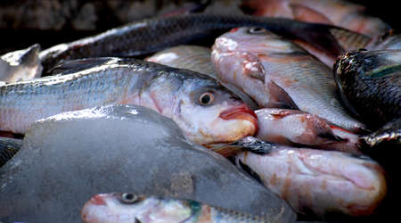 The rohu, rui, or roho labeo (Labeo rohita) fish ready to sell in indian market.