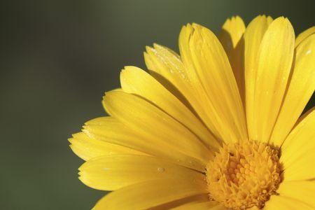 Yellow flower - closeup Stock Photo - 3447698
