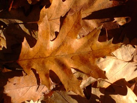 yellowautumn: Autumn leaves