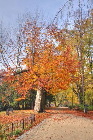 Autumn park Stock Photo - 3824115