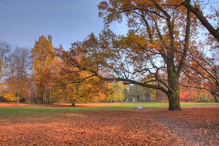 Autumn park Stock Photo - 3824114