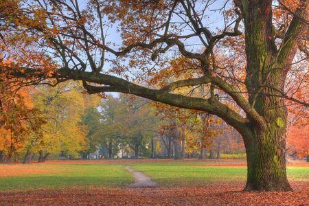 Autumn park Stock Photo - 3824134
