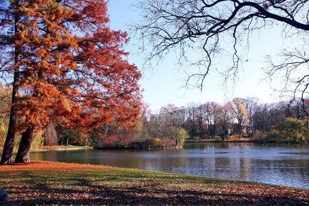 Colours of autumnin the park. photo