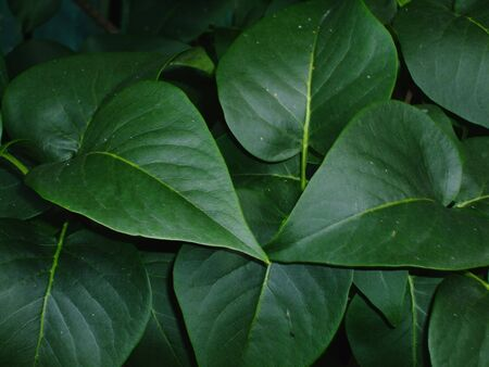 Green leaves on dark background Stock Photo - 5565231