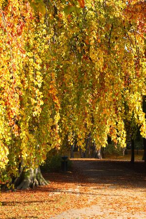 Autumn in the park Stock Photo - 5832075