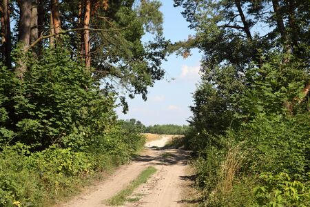 Path in the green forest in summer photo