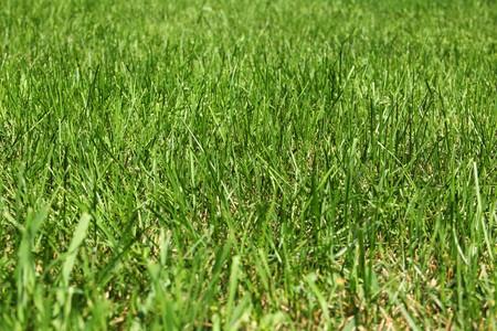 野草: Green wild grass background
