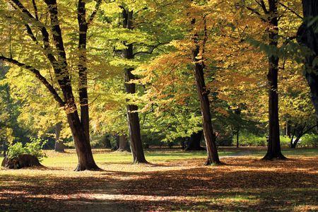 Autumn in the park photo