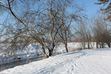 Winter landscape Stock Photo - 8343544