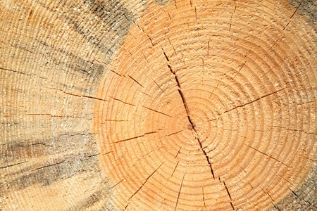 Wooden cut texture - close-up photo