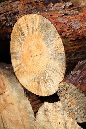 duramen: Pila de árboles talados Foto de archivo