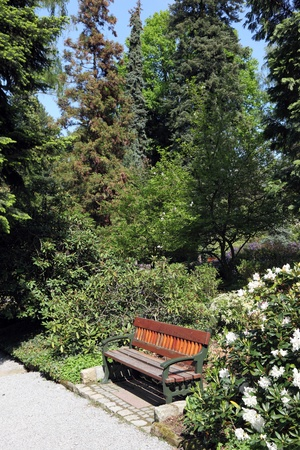 arboretum: Bench under a flowering azaleas and rhododendrons in the Spring Arboretum, Wojslawice, Poland