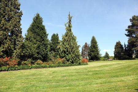 Meadow on the Arboretum in spring  Wojslawice, Poland Stock Photo - 13513619