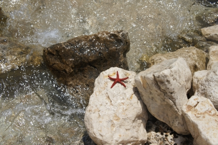 Red starfish on sea coast  Sardinia, Italy Stock Photo - 16230644