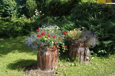 Green summer garden Stock Photo - 21948538