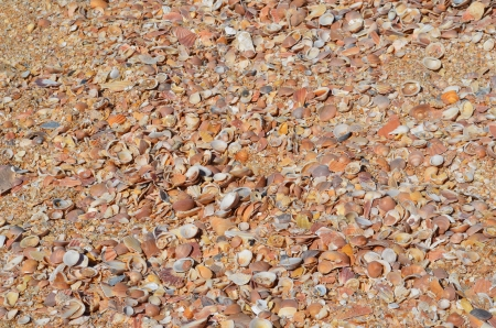 Sea shells on sand background  Stock Photo - 21948548