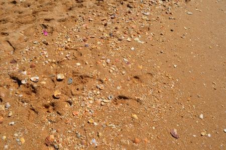 Sea shells on sand background Stock Photo - 21948551