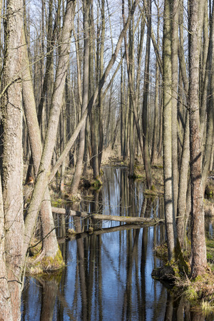 windings: Early spring in the Biebrza National Park, Poland, Podlasie