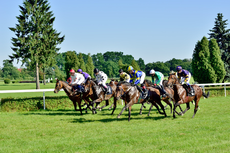 Horse race for the prize of the President of the City of Wroclaw on Juni 8, 2014  Race wins horse Silvaner with the number 7, son of the legendary horse Lomitas  Stock Photo - 29016952