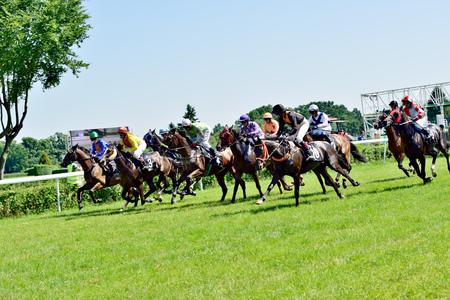 president???s: Giorno presidente s al Partenice pista, corsa per 3-anno-vecchi cavalli solo gruppo III a Wroclaw con 8 Juni 2014 vince Gara cavallo Zucchero con il numero 2