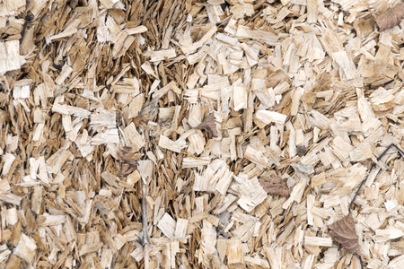 scobs: Fresh wood sawdust texture background.