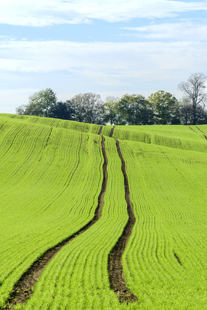 Field of green grass and trees. photo