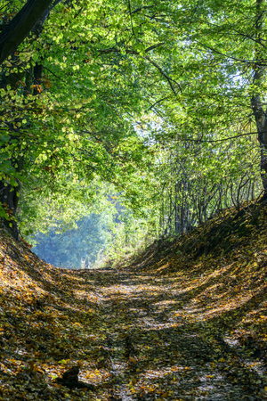 Early autumn forest road photo