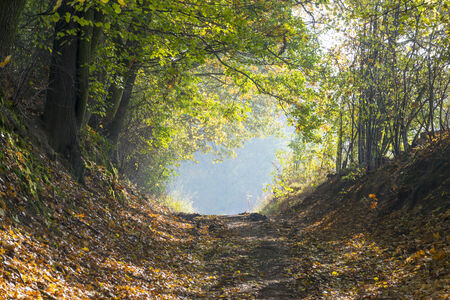 mystical forest: Autumn forest road. Stock Photo