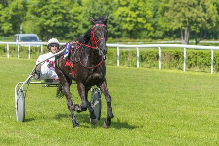 trotter: Wroclaw Poland May 10 2015: Presentation of the horses before the International race for 3yearold and older trotters French sulki in Wroclaw. In the photograph can be seen horseNitisa Josselyn number 6. Editorial