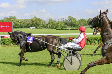 sassy: Wroclaw Poland May 10 2015: Finish the International race for 3yearold and older trotters French sulki in Wroclaw. In the photograph can be seen horses Thebes de Sassy number 4. Race horse wins Nitisa Josselyn with the number 6. Editorial