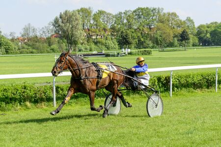 trotters: Wroclaw Poland May 10 2015: Finish the International race for 3yearold and older trotters French sulki in Wroclaw. In the photograph can be seen horses USIT number 7 winner of the second race.Wroclaw Poland May 10 2015: Finish the International race for 3